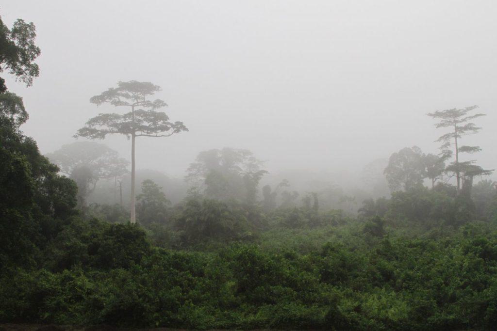 Forêt du Taï